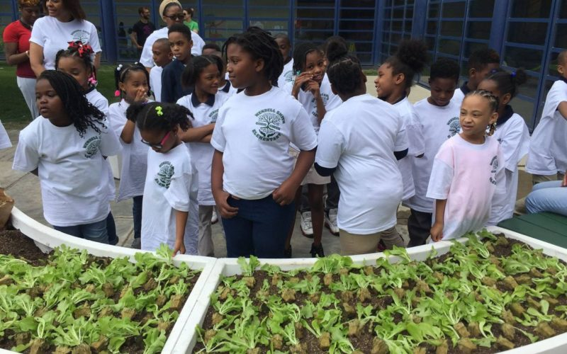 Kids Learn to Grow Their Own Food at Kitchen Community