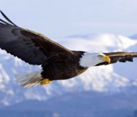 eagle-heightened-awareness