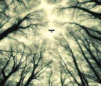 fall-poetry-wisdom