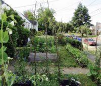 florida-liftsban-frontyard-gardens