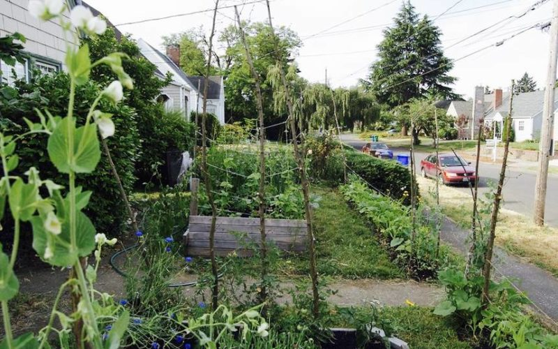 Florida Lifts Ban on Front-Yard Vegetable Gardens