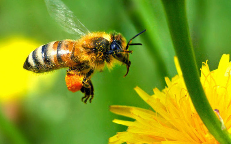 7 Reasons Why You Should Care about Bees