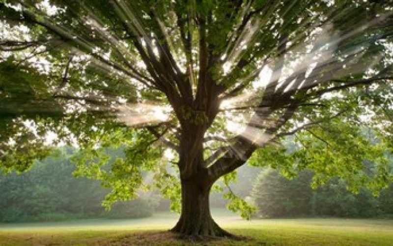The Spiritual Power of Trees