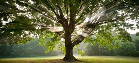 The Spiritual Power Of Trees The Soul Medic