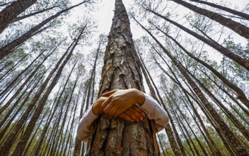 Tree Hugging Scientifically Proven to Improve Your Health