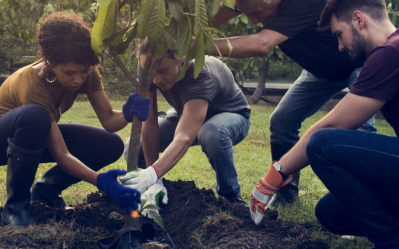 This University Found a Unique Way to Help Plant Millions of Trees